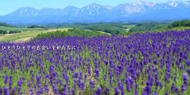 美瑛の丘 ラベンダー畑