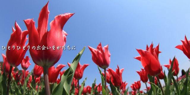 富山名産チューリップ